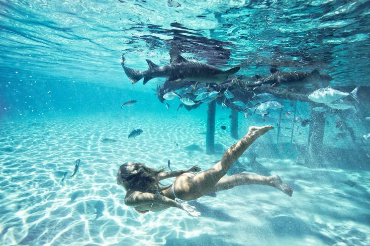 Indenxxx afghani naked girls swim with sharks